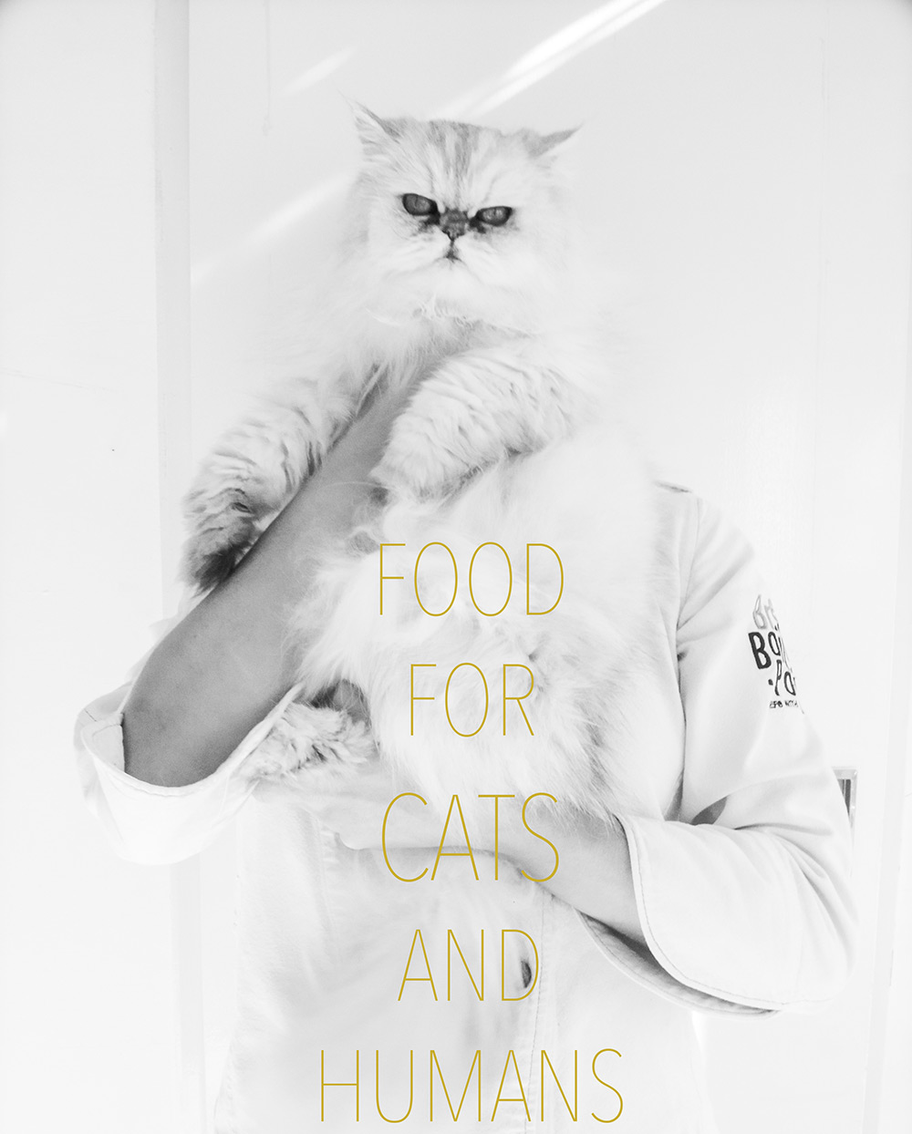 Food for cats and humans — Food to meet you.